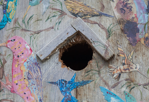 Woodpecker damage to the birdhouse