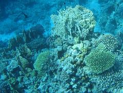 136_3676 (LarsVerket) Tags: egypt snorkling fisk undervannsfoto