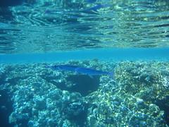 138_3840 (LarsVerket) Tags: egypt snorkling fisk undervannsfoto