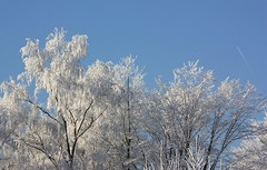 Winter (Sas & Rikske) Tags: park snow cold ice canon eos frozen frost belgium sneeuw belgi tervuren parc pound brabant vlaams riksketervuren