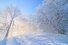 the hollow room (gregor H) Tags: blue trees winter mist snow landscape austria frost gettyimages vorarlberg bratanesque thesecretlifeoftrees vosplusbellesphotos hollowroom