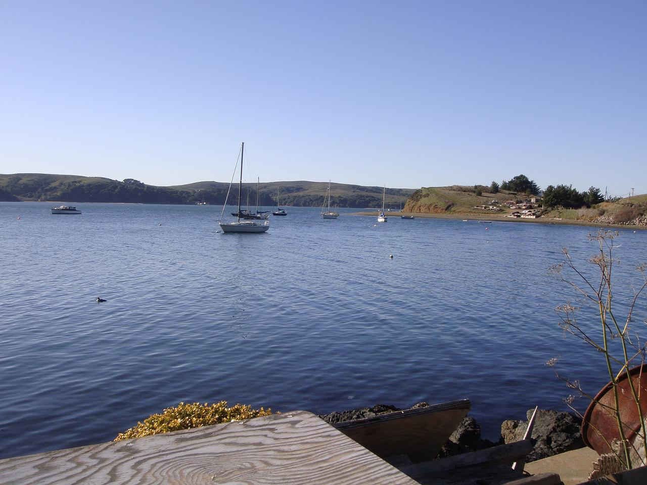 Tomales Bay near Tony's