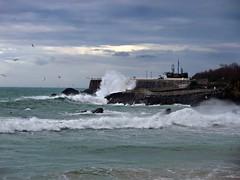 Gaviotas y temporal en Santander. (dlmanrg) Tags: sea espaa water barcos olas gaviotas santander temporal cantabria supershot lamagdalena yourcountry