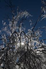 Ice_2-05-09-5052 (RobBixbyPhotography) Tags: ice florida