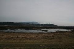 Duncan's Marsh