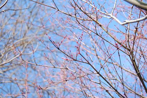 Spring blossoms 7