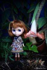 Matilda meet Brugmansia 76/365