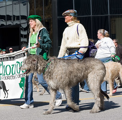 Irish Wolfhounds (Pat Kilkenny) Tags: costumes ladies irish green cars dogs canon march cops cleveland police parade scooters 2009 rollerblades stpatricksday pipers vintagecars march17 wolfhounds irishwolfhounds wearinofthegreen canon40d patkilkenny krazykops