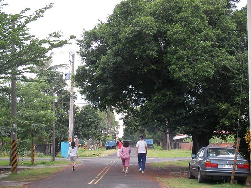 共和新村是東港鎮唯一的大面積公園綠地,是鎮民散步運動的最佳選擇!