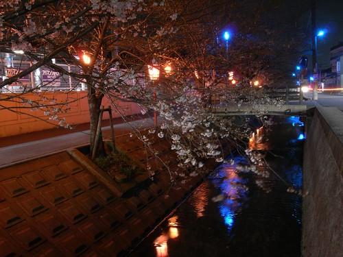 09-03-24【桜】@香芝-02