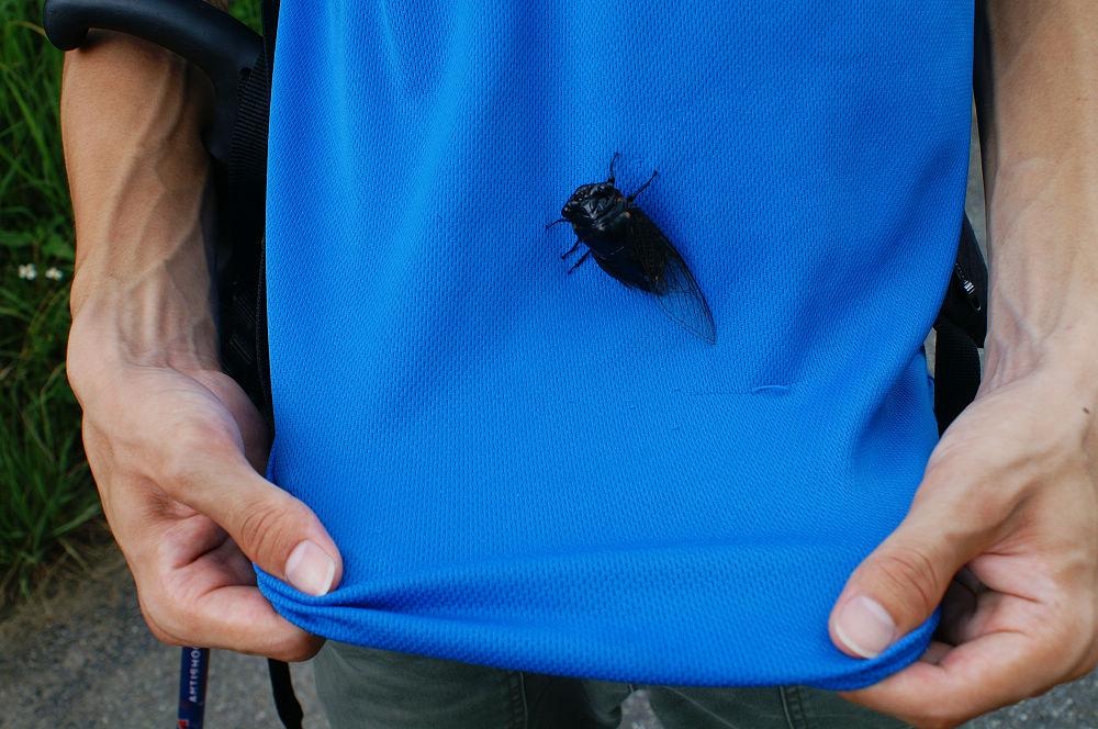 大崙頭尾105 撿到一隻蟬
