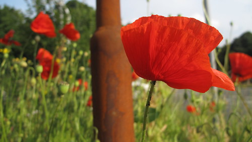 Poppy and pole