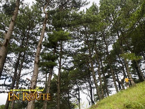Imugan Salacsac Pine Forest