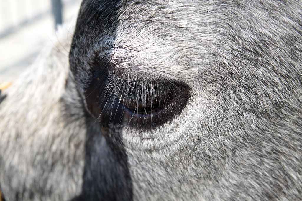 The Worlds Best Photos Of Eyelashes And Wimpers Flickr Hive Mind