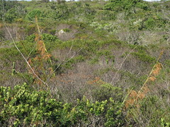 nordestao2009_VI_imagem 110 (Nelson Luiz Wendel) Tags: trees panorama mountains tourism nature water ecology rock brasil fauna river landscape flora rainforest walk adventure bahia tropical brazilian environment cerrado geography geology surrounding montanhas trilhas deserto ecosystem chapadadiamantina biodiversity ecoturismo fumaa ecotourism geologia ecologico rochas caatinga meioambiente mandacaru mataatlantica cachoeiradafumaa xerfitas nordestebrasileiro chapadas ecossistema rido ambientalista semiarido desertificao ecologo