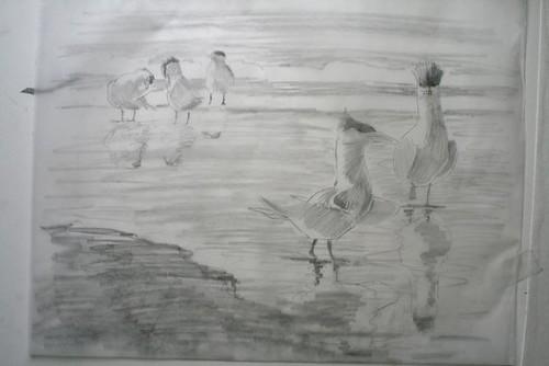 tern11