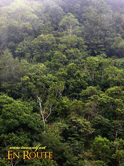 Imugan's Dipetrocarp Forest