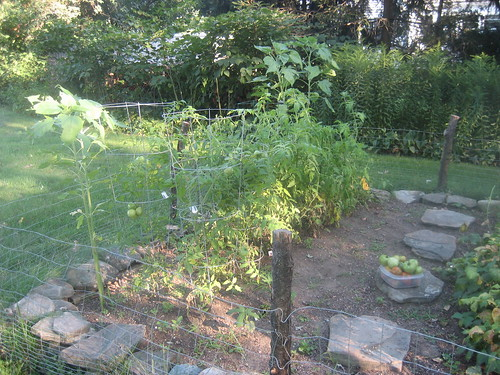 Our Garden upon finding the Late Blight