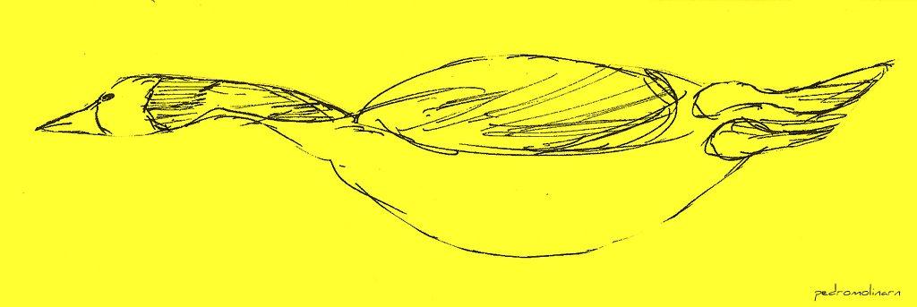 Gran pato en mar amarillo II