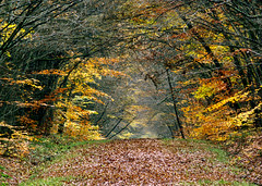 06 59 40 - Loiret, automne en fort d'Orlans (jeanpierreossorio) Tags: nature automne natureza chemin fort loiret vanagram mygearandme bewiahn
