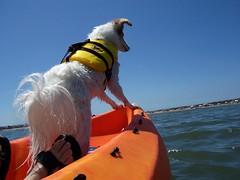 more captain Nadja (utski7) Tags: california dog pool kayak paddle inspire fiestaisland fullsteamahead