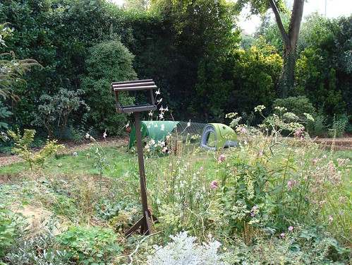 Eglu in garden