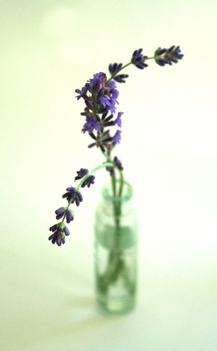 a little lavendar