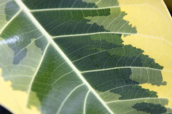 092609_leaf_05