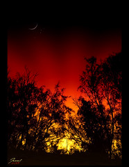 REd afterglow .. (Jewel~) Tags: trees red orange moon silhouette yellow silver twilight afterglow  d300 tamarisk  18200mm           saqraa