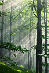 Fleeting beams (Evgeni Dinev) Tags: trees mist vertical fog forest sunrise spring bulgaria sunbeams beklemeto