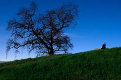 Beneath the Pale Moonlight (tagakodak) Tags: california longexposure tree canon 50mm oak lowlight nightshot hill january fullmoon slowshutter bayarea moonlight eastbay tamron pleasanthill contracosta 17mm wolfmoon 40d