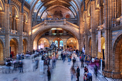 Natural History Museum (entrance hall)