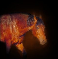 Red horse (Friese.) Tags: red horse color animal caballo cheval mix cross spanish pre braun pferd castao equine breton brawn andalusian paard espaol loh raza iberian crossbreed iberico cruzado youmademyday beautifulexpression purarazaespaola worldofanimals