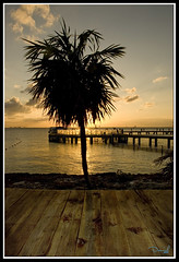 Ocaso en el Caribe / Sunset at the Caribbean 2 (DaNieL TDF) Tags: sunset tree backlight contraluz mexico atardecer mar nikon palm explore palmtree caribbean palmera silhoutte cancn caribe d80 nikond80 danieltdf