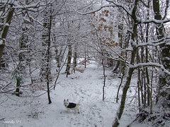 Perfect Camoflage (wendyforbes) Tags: winter white snow tree nature puppy scotland woods flickr fuji fife molly explore finepix snowing pup geotag mywinners
