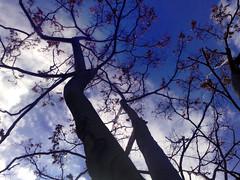Tree's 4