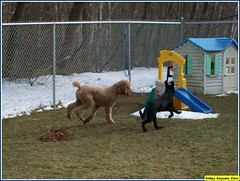 Mia, Jay (Alternative Dog Daycare) Tags: jay doug buffy sonny dogdaycare alternativedogdaycare