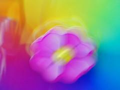 SPRING ETERNAL (Irene2727) Tags: abstract flower colors spring amazingcolors blueribbonwinner fineartphotos golddragon mywinners abigfave platinumphoto nikond40 colorphotoaward visiongroup theperfectphotographer multimegashot rubyphotographer damniwishidtakenthat goldenheartaward passionateinspirations inspiredbyyourbeauty amazingeyecatcher struckbyrainbow flickrcinated newgoldenseal