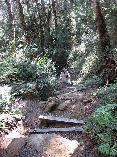 Mesilau Trail