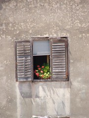 Window Colour (Crobroke) Tags: flower window croatia porec istria hrvatska parenzo