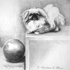 Ch.Mehetabel of offham (Rick_Dickinson) Tags: dog artist drawing historic ch wigan rickdickinson canineart crowlanestudio chmehetabelofoffhampekingese chhummingbee championtoydog