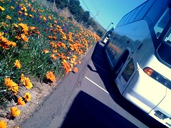 Flowers to the left of us, Buses to the right of us (Blue Rave) Tags: flowers orange plants flower color colour bus green nature floral colors leaves lines yellow coach pretty colours angle transport angles bluesky romance line transportation transit bloom romantic publictransport coaches motorcoach thecolorgreen thecoloryellow thecolororange iphonephotography iphoneography