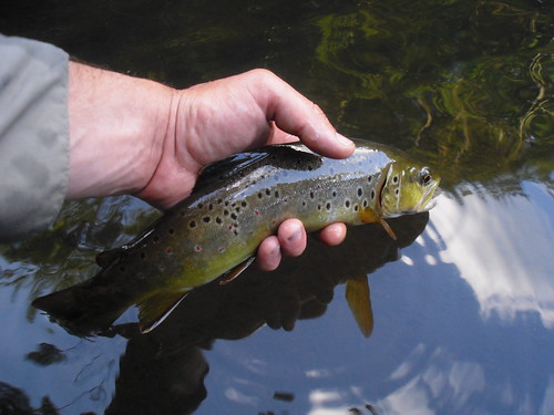 Releasing A Savage River Brown
