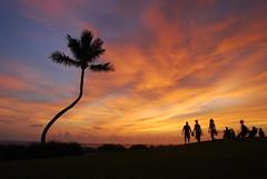 Crooked Palm Tree sunset (kstraw2) Tags: family trees sunset palm fl sanibel crooked captiva gorillapod nikond80 southseasresort hgvc perfectsunsetssunrisesandskys kstraw2
