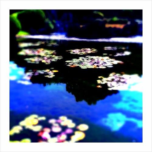 Waterweed #1