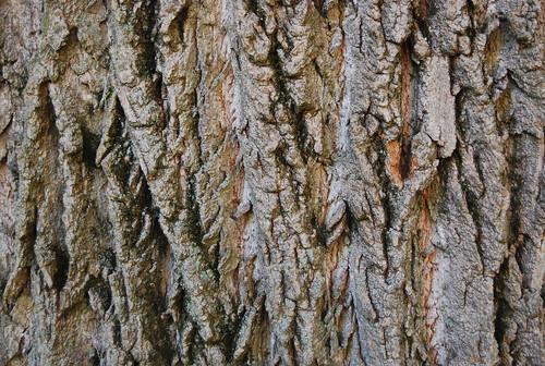 Tree Bark Texture 04