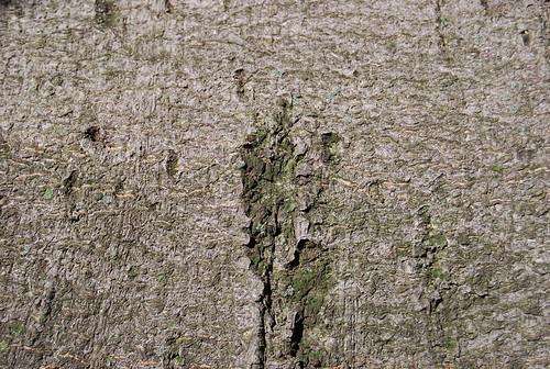 Tree Bark Texture 07