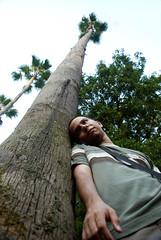 ME! (Ali Sarcheshmeh ( )) Tags: sky tree green me nikon palm mazandaran  alireza   ramsar   d80     omidvand delashoob