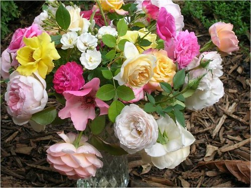 Heirloom and English roses are often good choices to grow organically.