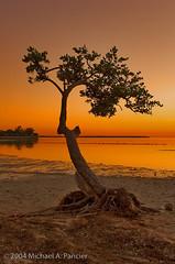 Three Years On Flickr - 2000th Photo (Michael Pancier Photography) Tags: ocean trees sunset usa beach bay florida mangrove beaches inlet keybiscayne seor naturesfinest virginiakey 2000thphoto naturephotographer thirdanniversary hobiebeach floridaphotographer michaelpancier michaelpancierphotography landscapephotographer coastalscenes flickr3years ihmlthis wwwmichaelpancierphotographycom seorcohiba